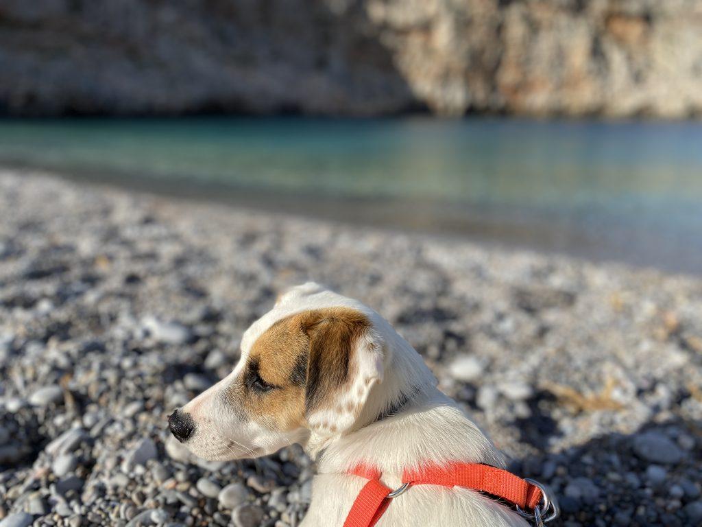 Adopcja psa na Krecie